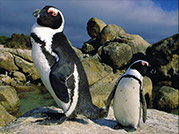 Visit the Penguins