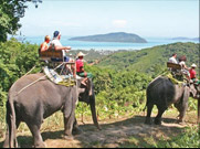 Enjoy a Elephant Safari